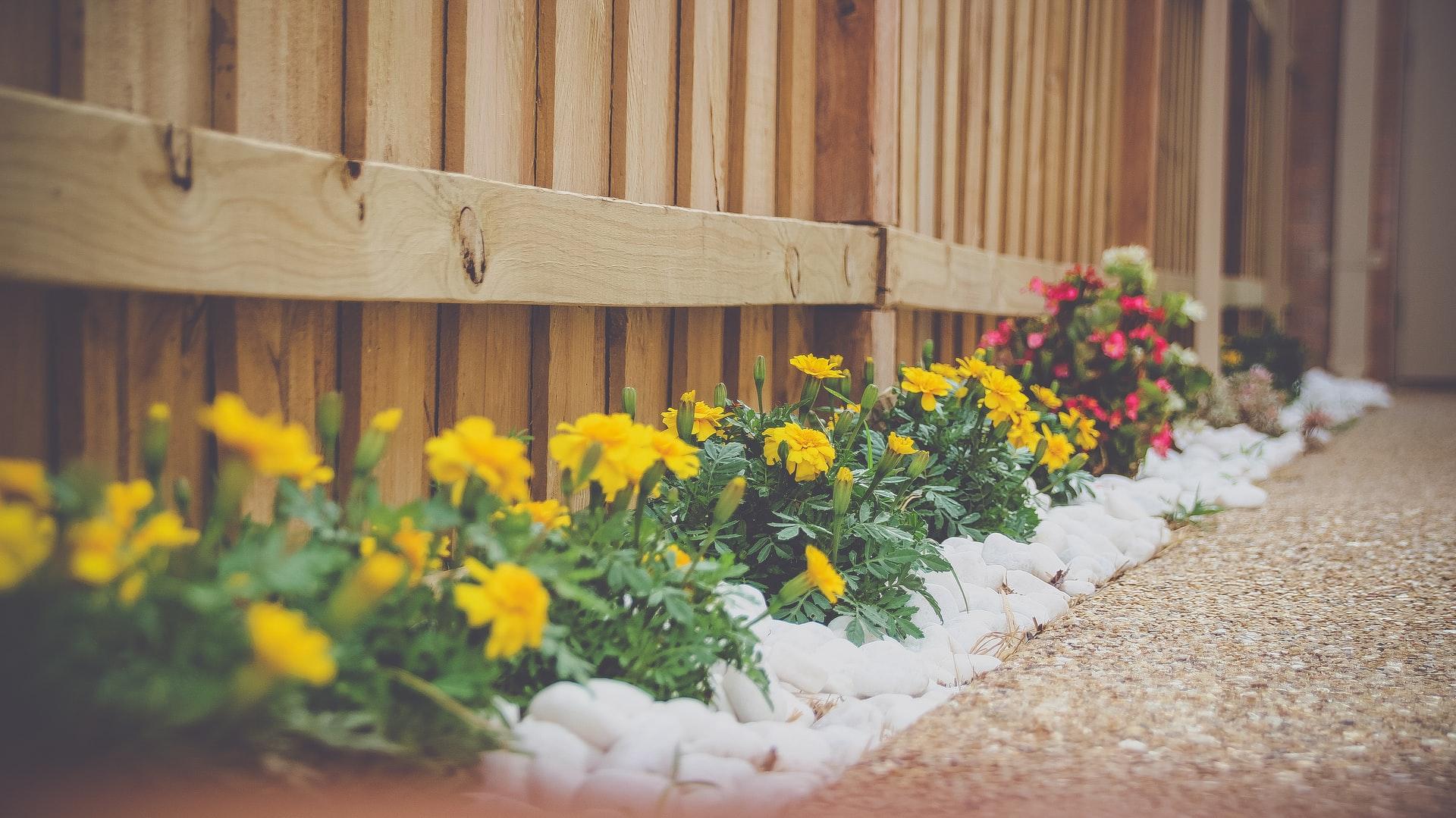 cloture en bois et fleur le long de la cloture avec des fleurs jaune et rose