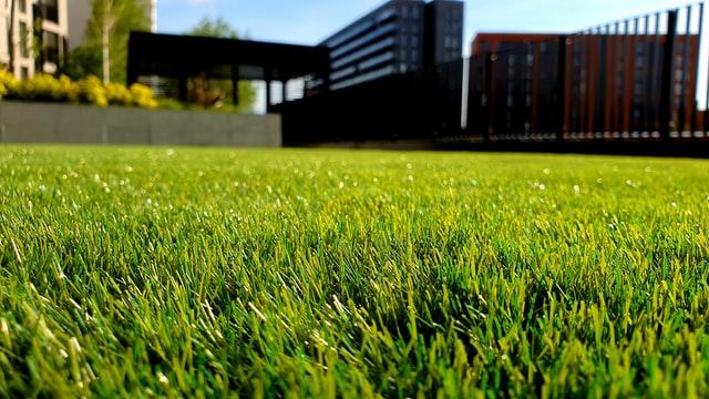 pelouse d'une maison