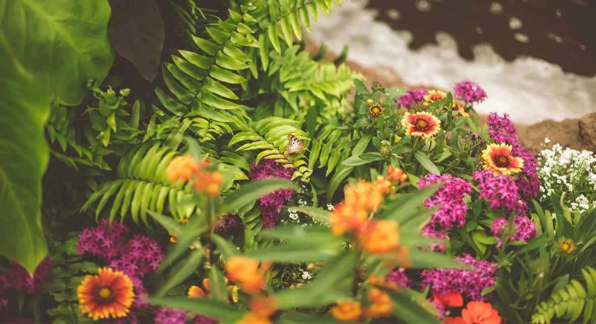 des fleurs dans un jardin avec une rivière en fond