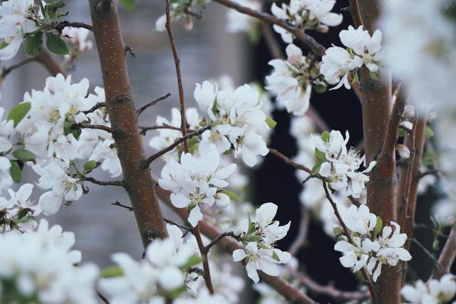 feuille d'arbre blanche