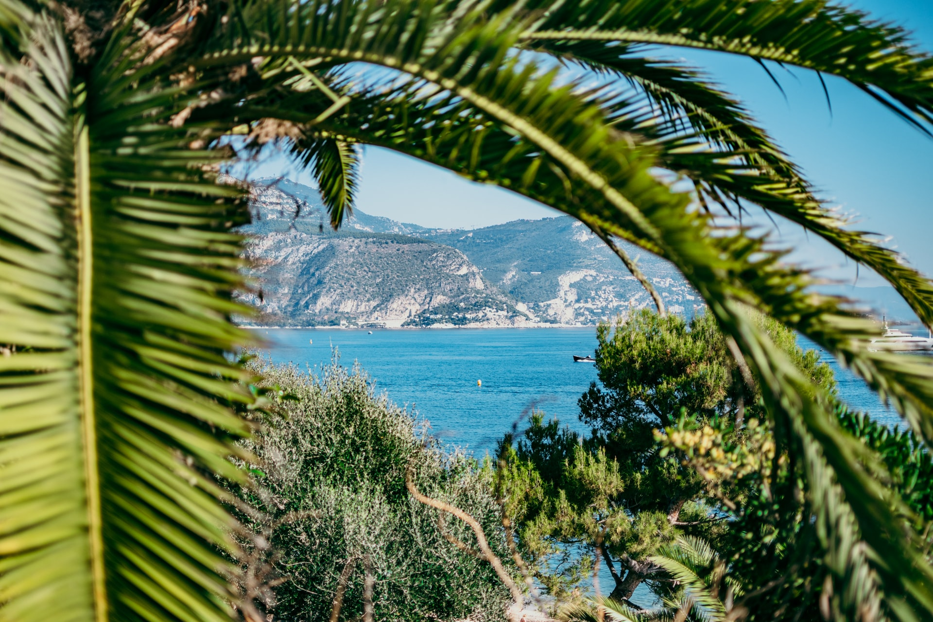palmier avec vue sur la mer Méditerranée