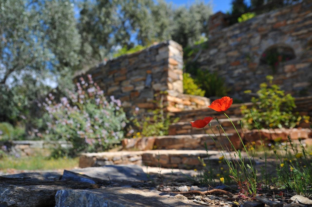 coquelicot avec en fond un mur et des marches en pierre