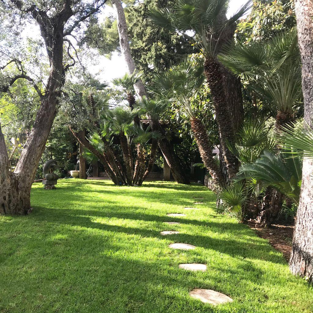 jardin avec des arbres et des pierre