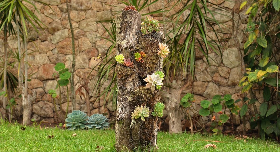 jardin avec un tronc d'arbre